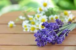 淡紫色和春黄菊 免版税库存照片