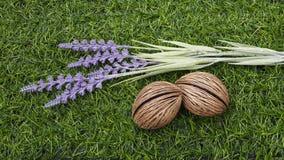 淡紫色和种子在草皮 免版税库存图片
