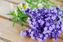 淡紫色和草本 库存图片