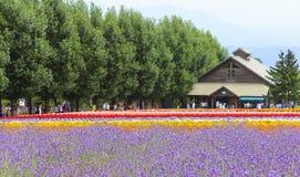淡紫色和Tomita的五颜六色的花田种田, Furano, Hokk 库存图片