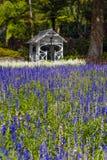 淡紫色在惠灵顿植物园,新西兰开花 免版税库存图片