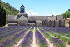 淡紫色在普罗旺斯法国 免版税库存照片