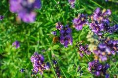 淡紫色在有陀螺的一个庭院里坐它 免版税库存图片