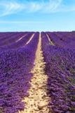 淡紫色在Valensole附近调遣在普罗旺斯,法国 库存图片