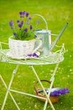 淡紫色夏天 库存图片
