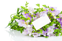 淡紫色小苍兰花和贺卡 免版税库存图片