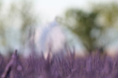 淡紫色开花夏天摘要 库存照片