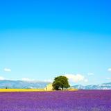 淡紫色开花开花的领域、房子和树。普罗旺斯,法郎 免版税库存图片