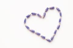 淡紫色开花心脏形状 免版税库存图片