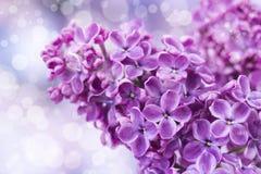 淡紫色开花的花 宏观照片 免版税库存照片