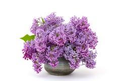淡紫色开花的花 库存照片