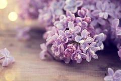 淡紫色春天开花束 库存图片