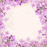 淡紫色框架 免版税图库摄影