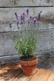 淡紫色植物在桌上的盆栽植物 库存图片