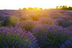 淡紫色海在南法国 免版税库存照片