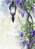 淡紫色灯笼 库存照片