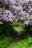 从淡紫色的植物的曲拱 免版税库存照片