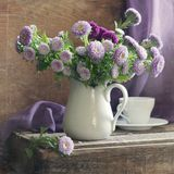 淡紫色的翠菊 图库摄影