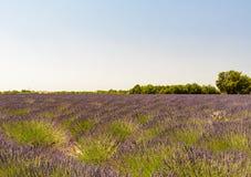 淡紫色的领域在普罗旺斯 免版税库存照片