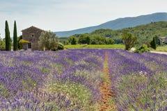 淡紫色的领域在普罗旺斯- Luberon法国的 库存图片