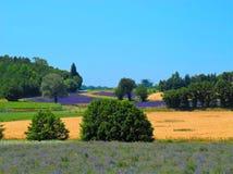 淡紫色的领域在法国 免版税库存图片