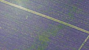 淡紫色种植园,空中录影 影视素材