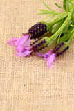 淡紫色粗麻布1 库存图片