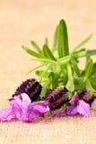 淡紫色粗麻布3 库存图片
