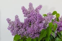 淡紫色美丽的花 免版税图库摄影