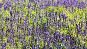 淡紫色美好的风景  库存图片