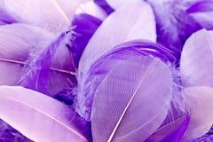 淡紫色羽毛 库存照片