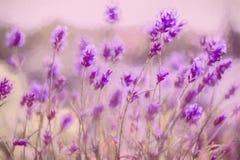 淡紫色背景 库存照片