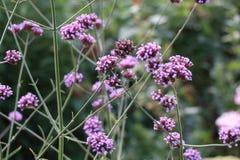 淡紫色花卉花春天 库存照片