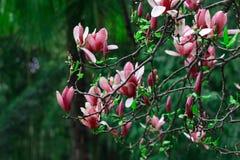 淡紫色花和绿色叶子 库存照片