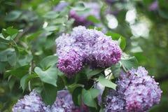 淡紫色花在夏天 库存图片