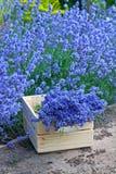 淡紫色花束在木箱的 库存图片