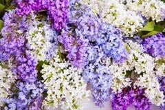 淡紫色花背景,绽放花 免版税库存图片