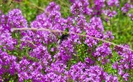 淡紫色花背景 库存照片