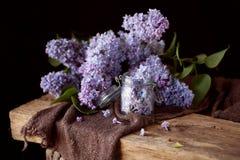 淡紫色花草本构成 图库摄影