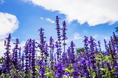 淡紫色花 库存照片