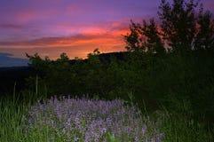 淡紫色蓝色野花暮色风景景色 库存图片