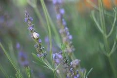 淡紫色蜗牛和花  库存照片