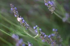 淡紫色蜗牛和花  图库摄影