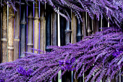 淡紫色被涂反对竹背景 库存照片