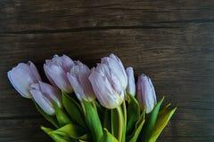 淡紫色郁金香花束  库存照片
