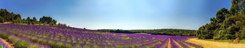淡紫色领域全景在普罗旺斯,法国 图库摄影