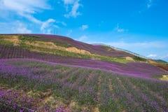 淡紫色领域公园 免版税图库摄影
