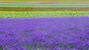 淡紫色领域和另一块花田 免版税库存图片