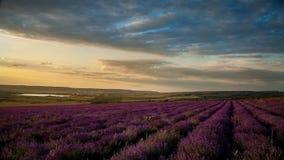 淡紫色领域在与云彩的蓝天下在日落 影视素材