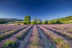 淡紫色领域在普罗旺斯,法国 免版税库存图片